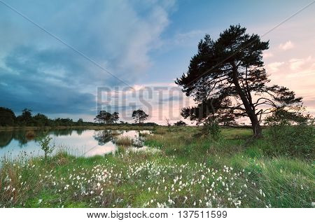 evening over marsh by lake with cotton grass in summer