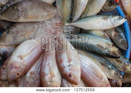 Various fishes stored on ice at the market