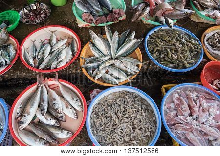 Various fishes and sea food at the market