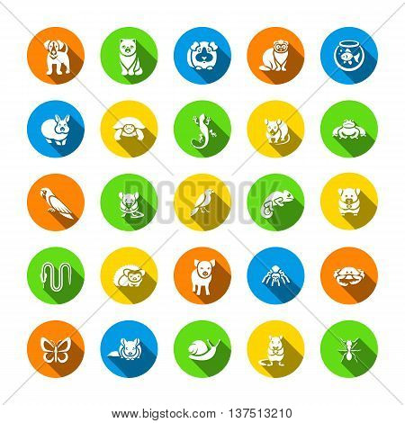 Animals pets vector flat silhouettes round icons set. Colorful pictograms of various domestic mammals, rodents, amphibian, insects, birds, reptiles, which people own at home. Petting zoo symbols