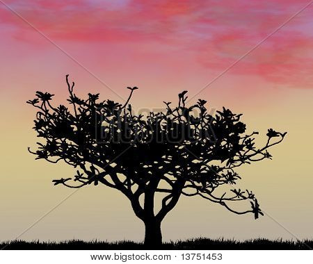 A silhouette of a tree during a stunning sunset.