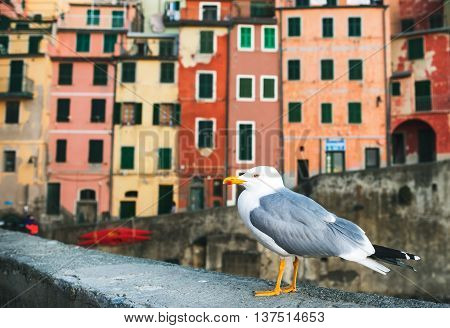 Sea Gull sitting on stone fence in Harbor of Riomaggiore with its traditional colorful buildings, Cinque Terre, Italy