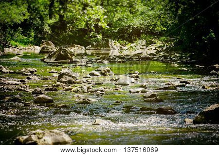 Forest Stone River Over Greenery in Sunny Day