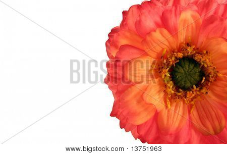 Beautiful mum isolated on white with plenty of space for text