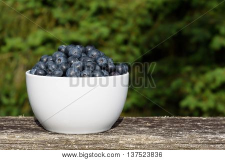 Fresh blueberries in a white bowl, on a deck railing with greenery in the background