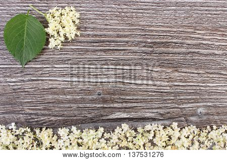 Elderberry Flowers With Leaves On Rustic Board, Copy Space For Text