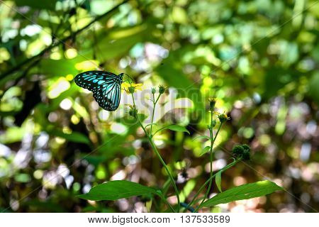 Butterfly In Tangkoko National Park.