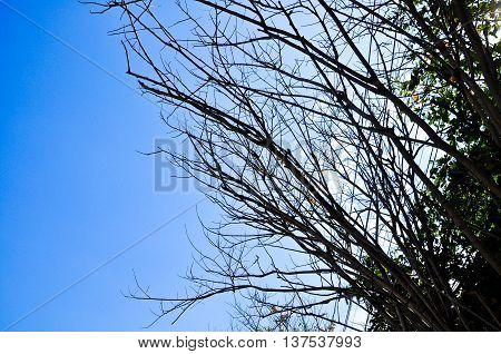 Wooden stick against blue sky background. Leafless tree branch detail.