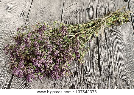 The herb oregano gathered into a bundle on gray wooden background.