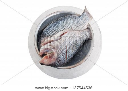 Raw Tilapia on white background ready to cook