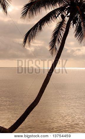 Diagonal palm tree