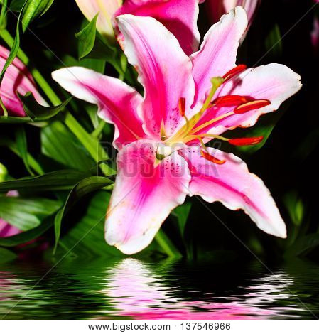 reflection in water surface beautiful flower lily