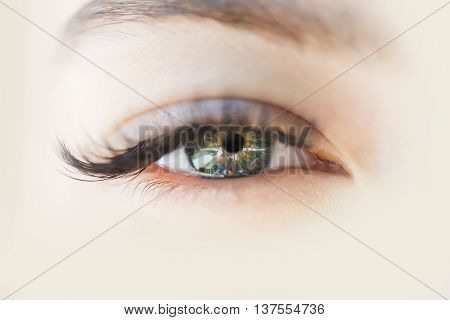 female open eye green color with long lush black eyelashes and eyebrow on clean skin of young woman closeup