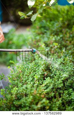 Farmer Spraying Pesticide Against Pests In Garden