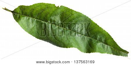 Green Leaf Of Peach Tree Isolated On White