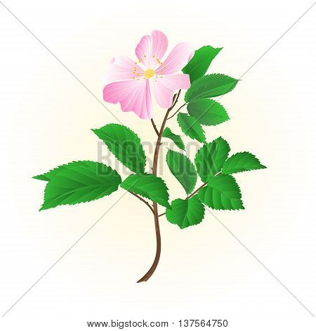 Twig wild rose leaves and flowers vector illustration