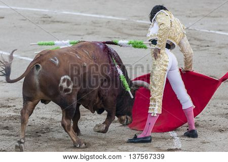 Linares SPAIN - August 29 2014: The Spanish Bullfighter Curro Diaz bullfighting with the crutch in the Bullring of Linares Spain
