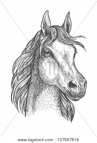 Cute scottish pony close up portrait of sketched small horse head with silky and soft hair. Great for horse breeding symbol or riding club badge design