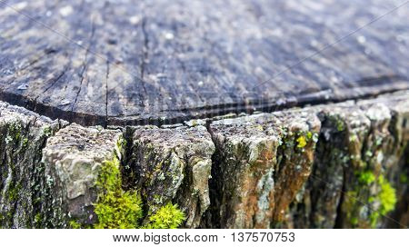 corner of a large old gray stump overlooking bark covered with green and yellow moss