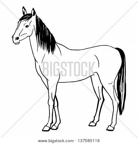 Vector illustration of a horse painted by hand. Isolated on white background. Doodle drawing of a horse.