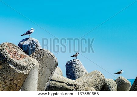 Three seagulls alighted ascending on a bay concrete tetrapods
