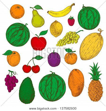 Flavorful tropical mango, pineapple and orange, banana, lemon and avocado, juicy green and purple grapes, apple, pear and peach, cherries, raspberry and plum, apricot, watermelons and cantaloupe sketch icons