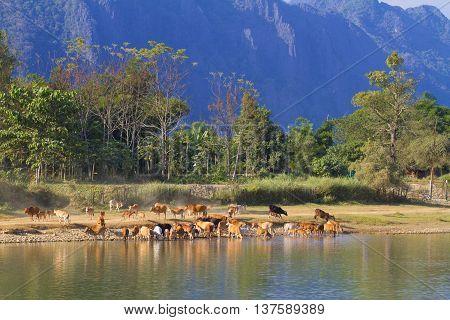 Rural landscape near Vang Vieng on Laos