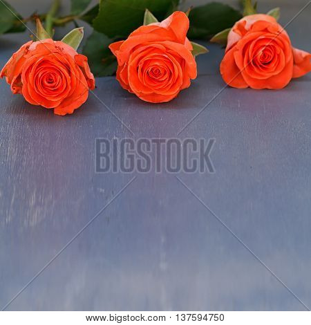 Three pink roses on old wooden background
