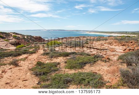 Indian Ocean views from the sandstone terrain at Red Bluff with in native plants under a blue sky with clouds on the coral coast in Kalbarri, Western Australia.