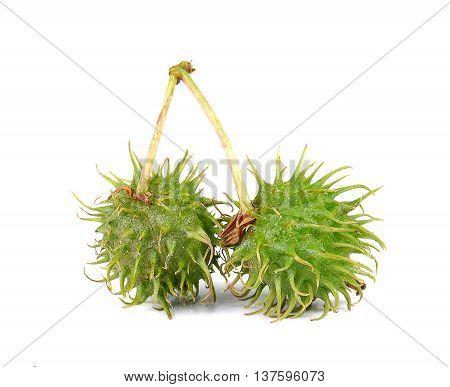Castor Castor Bean Castor oil plant isolated on white background.