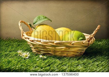 Few fresh lemons in basket on grass