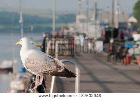 Seagulls By The Sea