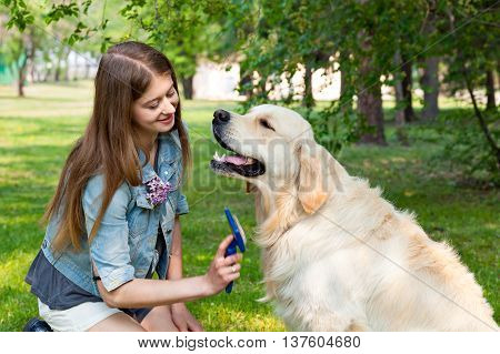 The content of Labrador. A young girl cares for dog fur outdoors. The owner of a pure breed dog fur golden retriever. The pleasure and the joy of hygiene.