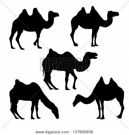 Set of five vector bactrian camel silhouettes