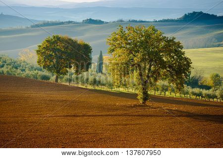Tuscan fields and  trees in a beautiful valley, natural outdoor landscape background