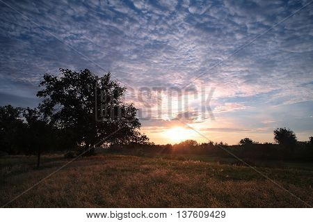 Sunrise in the forest. Big tree in the meadow at dawn with clouds. Morning landscape.