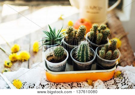 Various Cactus Plants, Selective Focus. Cactus And Succulents Co