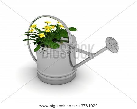 Dandelions In A Metal Watering Can