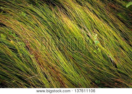 green grass on meadow - abstract natural surface