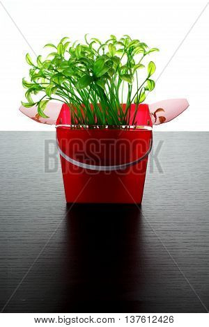 Young Plants in Plastic Box on Wooden Background