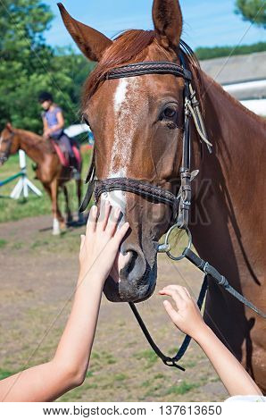 two children's hands stroking his head racehorse