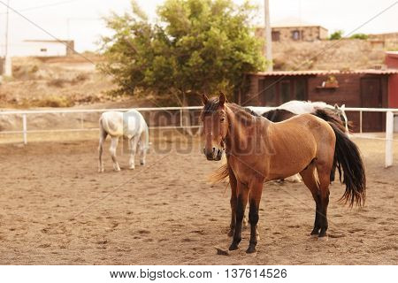 Horses standing at horse farm on a sunny day.