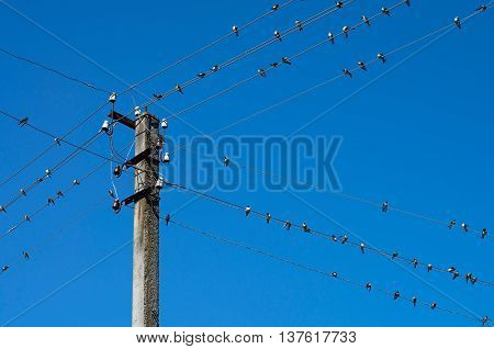Swallows on wires on a background of blue sky