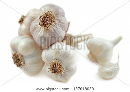Garlic, Allium sativum, on a white background