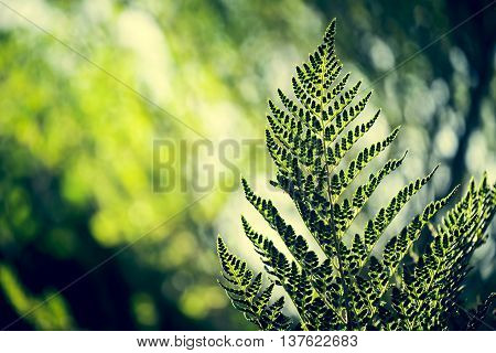 Retro hipster style nature environment scenery fern leaf and forest trees blur background in green colors.