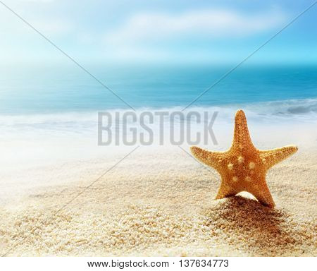 Caribbean starfish over sand beach. Tropical landscape.