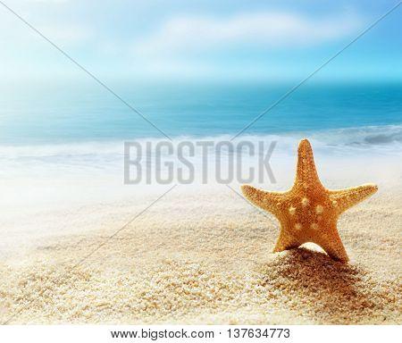 Caribbean starfish over sand beach. Tropical landscape.