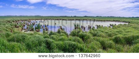 Panorama of green wetlands in Saskatchewan Canada.