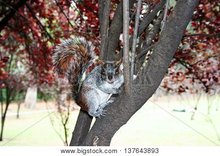 A chipmunk looking standing in a tree