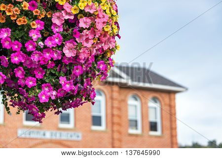 Hanging Basket With Colorful Flowers